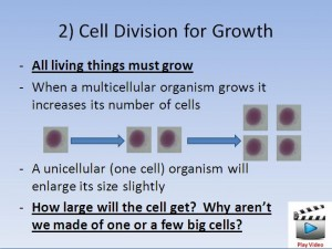Cell Division 2