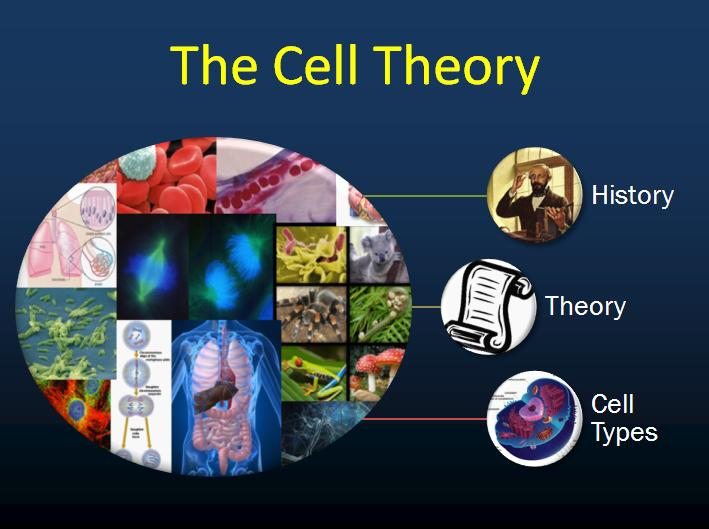 Unicellular Cell Diagram Cell Theory Related Ke...