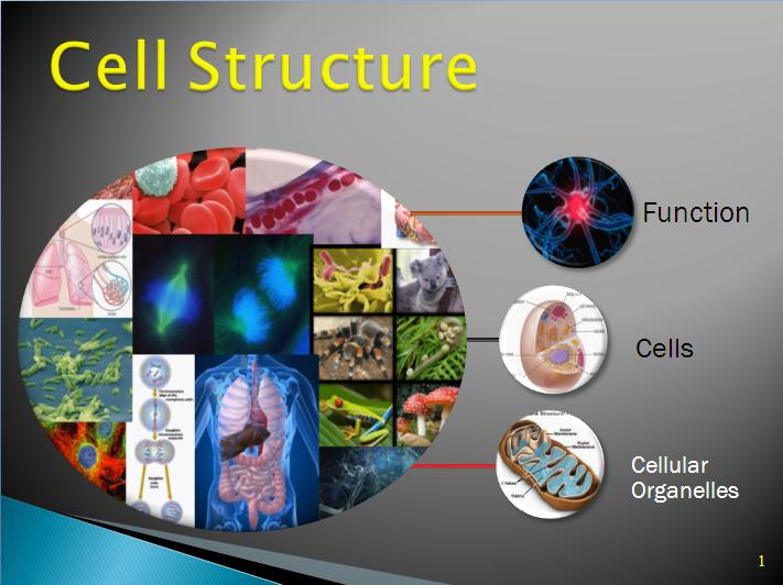 Cells lesson high school