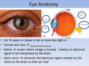 Lesson 11 Eye 3