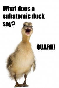 Duck Funny