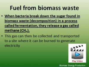 L7 Biomass 2