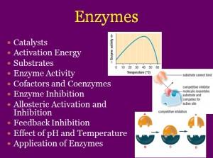L5 Enzymes 1