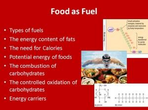 L3 Food Fuel 1