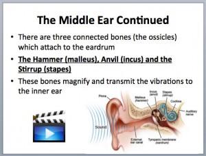 L5 Hearing 2