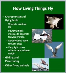 L4 Animals Fly 1