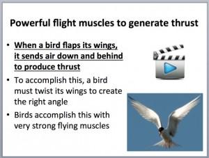 L4 Animals Fly 2