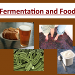 How is fermentation used to make food?